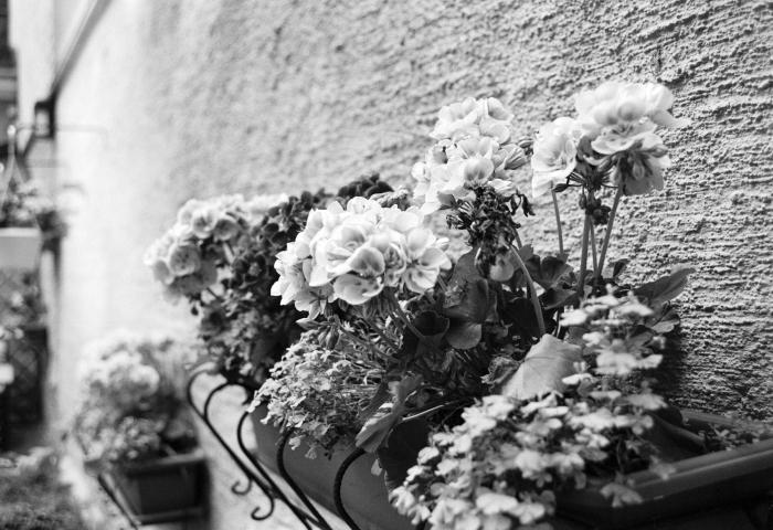 kukkia-1