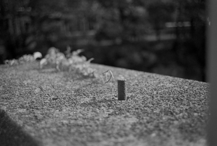 stump-0013