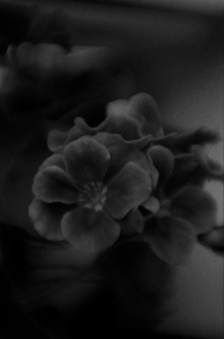 kukka-0003
